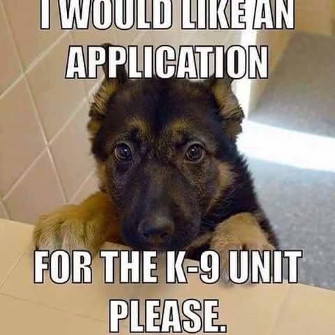 k9-puppy