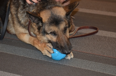 Retired MWD comes home